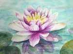 Waterlily in Watercolor