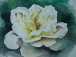 White Rose in Watercolor
